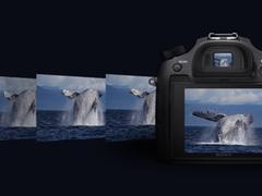 """影像""""入画"""" 谈索尼黑卡RX10M4动植物摄影"""