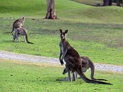 去看看赤道那边的浪 尼康Z7旅拍澳洲大洋路