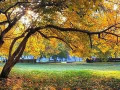 带上学妹畅游金色之秋,让尼康D5300记录属于时光的甜蜜