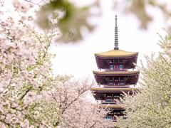 武汉最美赏樱攻略!踏青、美食、潮拍,解锁赏花新姿势!