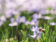 """""""春暖百花香"""",教你如何分辨春天开的这些花!"""