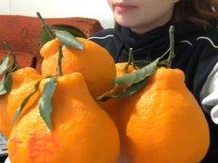 苏宁408直播直卖节:上山采新鲜,丑橘带回家